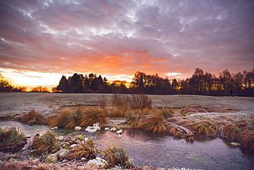 Reeds in a stream in the winter morning sun, Aubing, Munich, Upper Bavaria, Bavaria, Germany