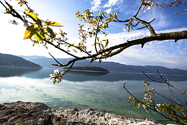 Views of lake Walchensee and Sassau island, Walchensee, Alps, Upper Bavaria, Bavaria, Germany