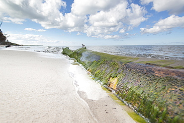 Mossy tree trunk lies on the western beach, Western Pomerania Lagoon Area National Park, West beach, Fischland-Darss-Zingst, Mec