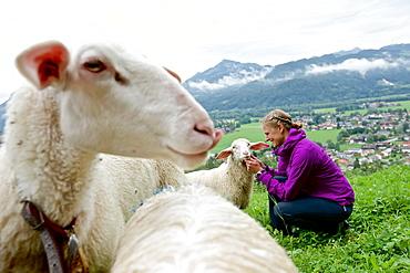 Woman petting a sheep, Chiemgau, Bavaria, Germany