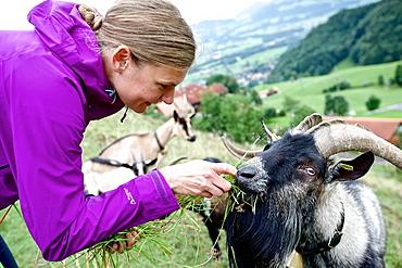 Woman feeding a billy goat, Chiemgau, Bavaria, Germany