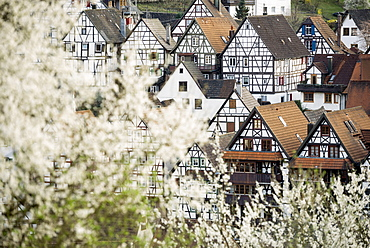Timber frame houses and trees in blossom, Schiltach, Black Forest, Baden-Wuerttemberg, Germany