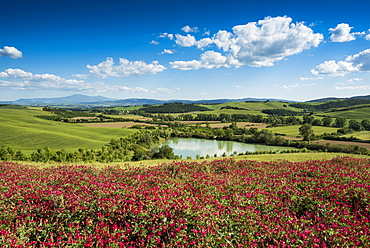 flower meadow, near San Quirico d`Orcia, Val d`Orcia, province of Siena, Tuscany, Italy, UNESCO World Heritage