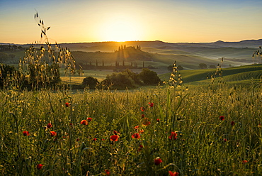 country residence and cypress trees at sunrise, near San Quirico d`Orcia, Val d`Orcia, province of Siena, Tuscany, Italy, UNESCO