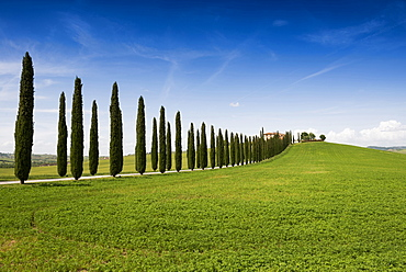 country residence and cypress trees, near San Quirico d`Orcia, Val d`Orcia, province of Siena, Tuscany, Italy, UNESCO World Heri