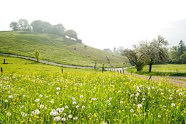 landscape in Spring, Hexental near Freiburg im Breisgau, Black Forest, Baden-Wuerttemberg, Germany
