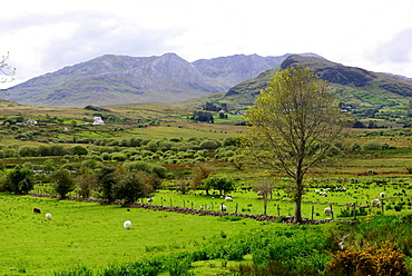 Landscape with hills and meadows along the road 336 in Connemara, Ireland