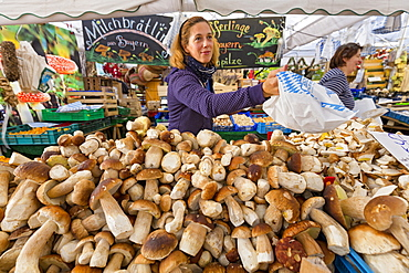 Porcino mushrooms on a market stall, Viktualienmarkt, Munich, Upper Bavaria, Bavaria, Germany