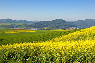 Solar park with yellow flowering canola fields in summer, Lieschensruh, Edertal, Hesse, Germany, Europe