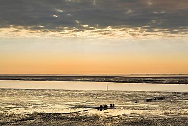 Wadden sea, Amrum Island, North Frisian Islands, Schleswig-Holstein, Germany