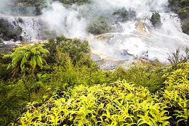 Sinter terraces at Orakei Korako (Hidden Valley) geothermal area, Taupo Volcanic Zone, North Island, New Zealand