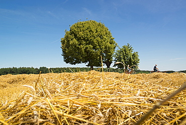 Cyclists on a trip over summer fields on the outskirts of Munich. Aubing, Munich, Bavaria, Germany