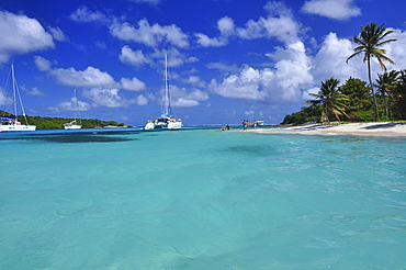 sailing ships on the sea and beach with palms, Petit Rameau, Tobago Cays, St. Vincent, Saint Vincent and the Grenadines, Lesser Antilles, West Indies, Windward Islands, Antilles, Caribbean, Central America
