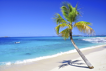 Palm tree and dinghy at a tropical beach, sea, Palm Island, St. Vincent, Saint Vincent and the Grenadines, Lesser Antilles, West Indies, Windward Islands, Antilles, Caribbean, Central America