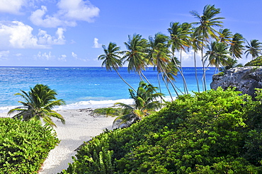 Tropical beach with palm trees, sea, south coast, Barbados, Lesser Antilles, West Indies, Windward Islands, Antilles, Caribbean Islands, Central America