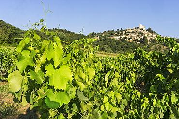 Vineyard near Lacoste, Lacoste, Vaucluse, Provence-Alpes-Cote d'Azur, France