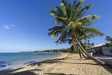 Las Terrenas Beach, Panorama, Samana, Dominican Republic, Antilles, Caribbean