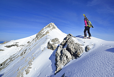 Female back-country skier ascending Oedkarspitze, Karwendel, Tyrol, Austria