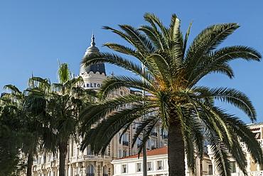 Carlton Hotel, Facade, Palm tree, Cannes, Cote d'Azur, France