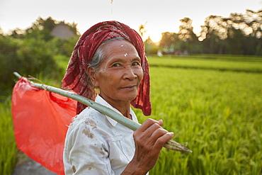 Rice paddies, rice field Penestanan, Ubud, Bali, Indonesia