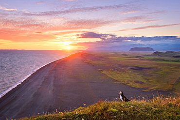 Sun, Sunset, Beach, Puffin, Klifandi, Dyrholaey, Iceland, Europe