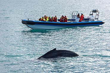 Boat, Whale Watching, Skjalfandi, Husavik, Bay, Iceland, Europe
