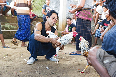 Cockfight during a religious festival, near Sidemen, Bali, Indonesia, Asia