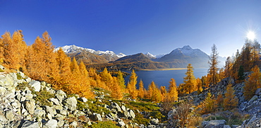 Lake Sils in autumn, Piz Corvatsch and Piz da la Margna, Upper Engadin, Engadin, Grisons, Switzerland