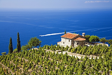 Small villa and vineyard above the coast near Colle d'Orano, Elba, Italy