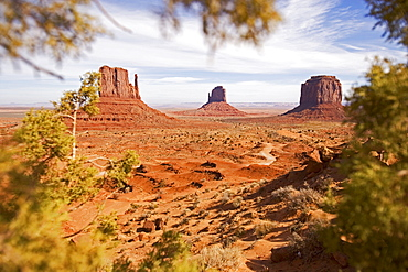 View through a bush into the Monument Valley, Monument Valley, Arizona, USA