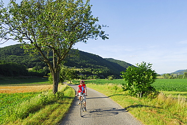 Female cyclist riding along road, Danube Cycle Route Passau to Vienna, Wachau, Lower Austria, Austria