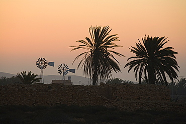 Wind wheels and palm trees at sunrise, Fuerteventura, Canary Islands, Spain, Europe