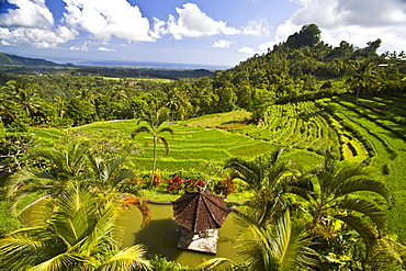 terraced rice fields, Indonesia Bali