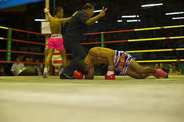 Thai boxer lying on ground, referee counting out, Thai Boxing, Lumphini Stadium, Bangkok, Thailand