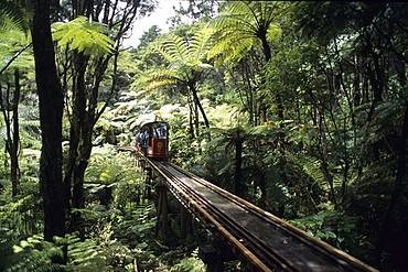 Driving Creek Railway, Coromandel, Coromandel Peninsula, North Island, New Zealand