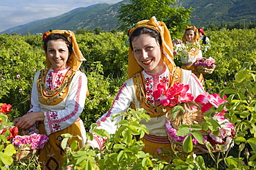 Rose picking girls at harvest, Rose Festival, Karlovo, Bulgaria, Europe
