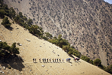 A trekking group and their mules, Toubkal Region, Atlas Mountains, Morocco, North Africa