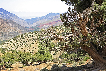 View to Tizi Oussem, Toubkal Region, Atlas Mountains, Morocco, North Africa