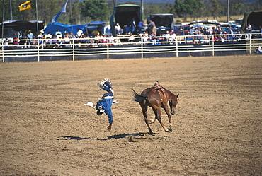 Rodeo, Mareeba, Queensland, Australia