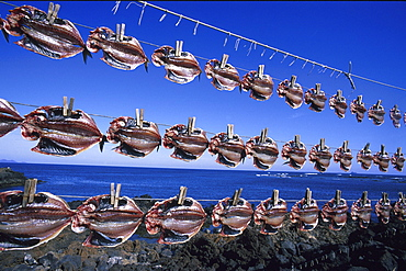 Drying fish, Fishing harbour, Orzola, Lanzarote, Canary Islands, Spain