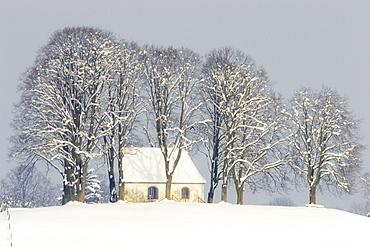 Chapel behind trees in winter, near Antdorf, Upper Bavaria, Germany