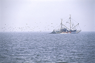 Shrimp Boat in Wadden Sea, Germany