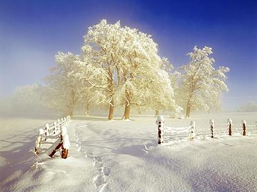 Misty winterlandscape, Upper Bavaria, Germany