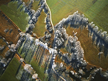 Aerial view of frost-covered trees, Kochelseemoor, Upper Bavaria, Germany