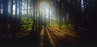Sun shining through forest, Upper Bavaria, Germany