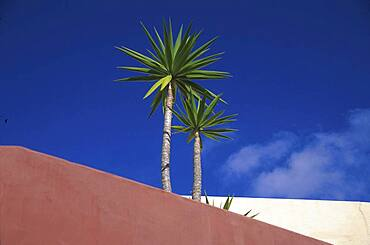 Palm trees on the roof of the Hotel Rural Finca Las Salinas in the sunlight, Yaiza, Lanzarote, Canary Islands, Spain, Europe