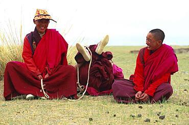 Laughing tibetan monks, Qinghai, China, Asia