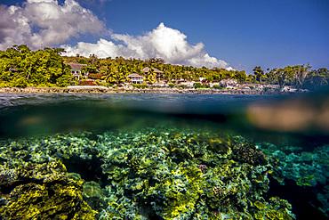 Underwater off Tanna, Vanuatu, South Pacific, Oceania
