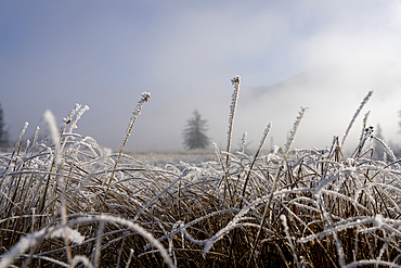 View over the hoarfrost-covered cultural landscape of the Loisach-Kochelsee Moore and the fodder meadows, Bavaria, Germany.