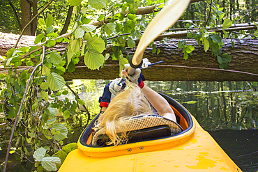 Paddler in kayak in front of fallen tree, Germany, Brandenburg, Spreewald